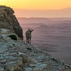 Nature And Animals in Mizpe Ramon