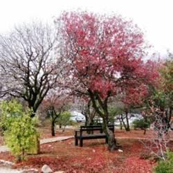 Public Parks & Gardens in Jerusalem